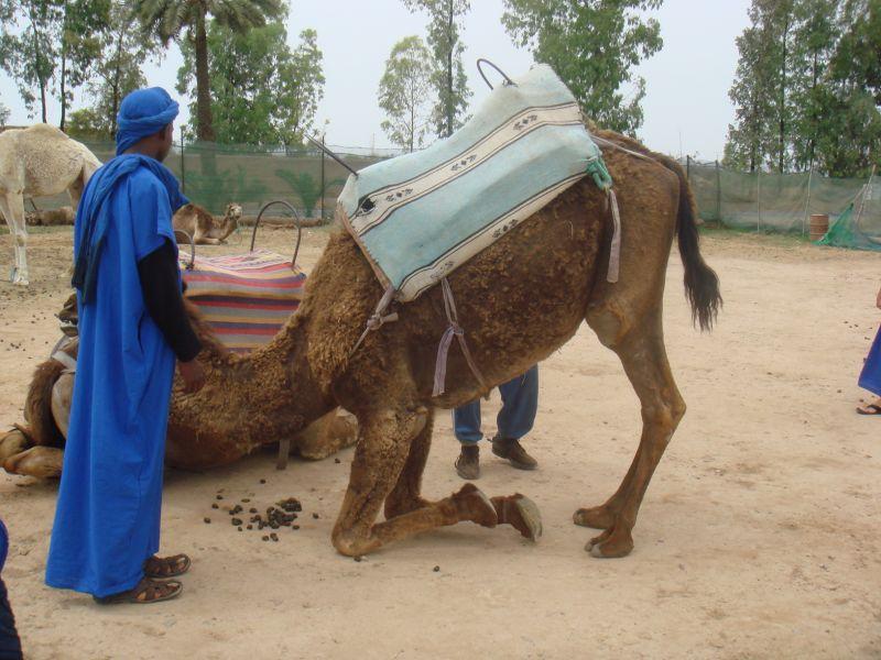 marrakechjuin09155.jpg